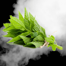 Spearmint E-Liquid from Elite Liquid